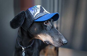 526ee140987 INTRODUCING NEW UPF50+ HATS FOR DOGS